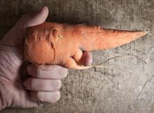 carrot-gun