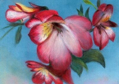 """""""Alstroemeria"""" pastel 2010 / 40x32 cm"""